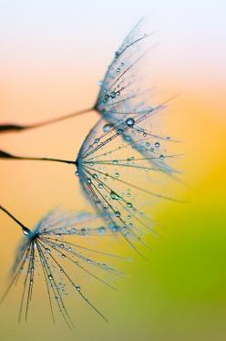 """500px / Photo """"Waterpaint"""" by Andrea Gulickx"""