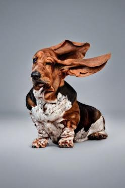 Basset )) GONE WITH THE WIND!!  The basset of the 'Alternative energy' advertisement by JOHN DOE Worldwide