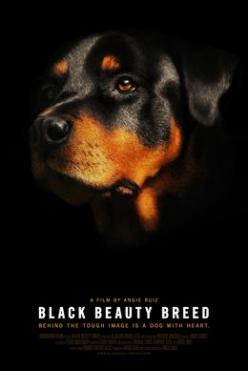 BLACK BEAUTY BREED - FILM ABOUT ROTTWEILERS in CAMBRIDGE, MA July 17, 2014. Sign up!!! Still need more viewers!! Tugg - The movies you want at your local theater: Black Beauty, Dogs Cw, Rotties 4Ever, Rotties Rule, Dogs Rottis, Rotti Dog, Beauty Breed, Lo