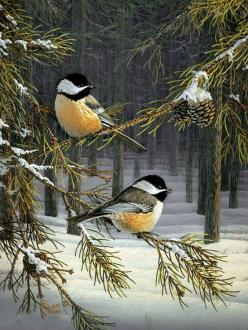 Black-Capped Chickadee  (have had these eating seeds from my hand at Mendon Ponds Park): Sam Match, Art Birds, Christmas Card, Beautiful Birds, Favorite Bird, Painting, Animal