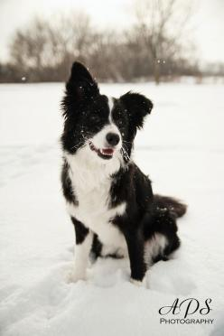 Border Collie Puppy | Playing in the Snow!