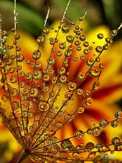 Bring me then the plant that points to those bright lucites swirling up from the earth, and life itself exhaling that central breath! Bring me the sunflower crazed with the love of light   ~ Eugenio Montale: Water Drops, Waterdrop, Nature, Beautiful, Dewd