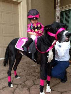 Cool costume. Great Dane dressed as a horse.: Great Danes, Animals, Dogs, Halloween Costumes, Horses, Funny, Baby, Costume Idea, Kid