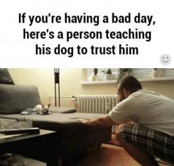 If you're having a bad day, here's a person teaching his dog to trust him