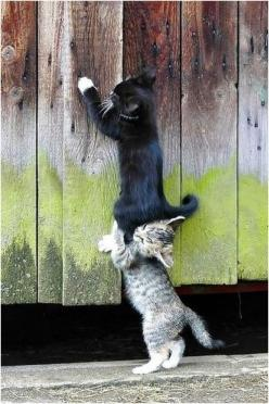 Kittens, kitty, youngster, wooden boards, on top, ''Hey, you are squeezing my ear!'', pet, cute, nuttet, adorable, furry, fluffy, photograph, photo: Cats, Kitten, Teamwork, Animals, Pet, Kitty, Friend, Team Work