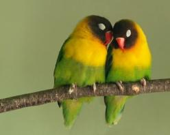 love birds..joe & jeff each had one when they were little named squeaky & rainbow!