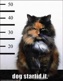oh my goodness this looks like our cat! lol    so true! some cats deserve to go to cat prison, like our cat Gemma.....