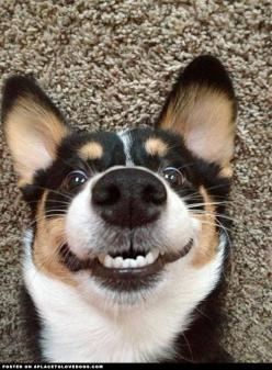 Overly Happy Canine