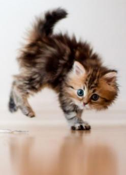 Playful kitty: Kitty Cats, Animals, Cuteness, So Cute, Pet, Adorable Kitten, Baby, Cute Kittens