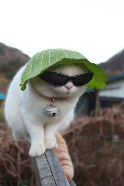 Putting a giant bell, sunglasses and cabbage on the head of a cat is SUCH a good idea! Obviously the person who owns this cat now always sleeps with one eye open.: Cool Cats, Hats, Animals, Cabbage, Funny Cat, Pets, Kitty