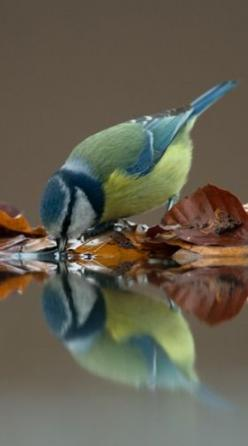 REAL - This is how you can tell 'reflection' in a photo... The character of the water is part of the photo.