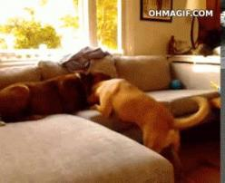 The dog who knew exactly what was coming.   31 GIFs That Will Make You Laugh Every Time