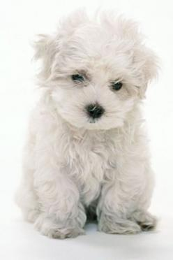 This. Is. SO FREAKING ADORABLE!!!!!!!!!!!!!!!!!!!!!!!!!!!!!!!!!!!!!!!!!!!!!!!!!!!!!!!!!!!!!!!!!!!!!!!!!!!!!!!!!!!!!!!!!!!!!!!!!!!!!!!!!!!!!!!!!!!!!!!!!!!!!!!!!!!!!!!!!!!!!!!!!!!!!!!!!!!!!!!!!!!!!!!!!: Animals, Sweet, Dogs, So Cute, Pet, Funny