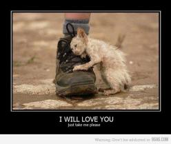 this is so sad. WE MUST PROTECT, CARE FOR AND LOVE THESE SWEET LITTLE ANGELS!!!!!!!!!!!!!!!!!!!!!!!!!!!!!!!!!!!!!!!