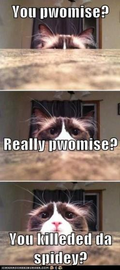 You Pwomise?                                                                                                                                           Really pwomise? You killeded da spidey?: Funny Animals, Funny Cats, Funny Stuff, Funnies, Humor, Kitty