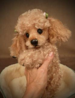 """""""Tuffy"""" the Poodle Palm Puppy...I'd say this was a real pup but the toes looked stitched: Palm Puppy, Animals, Dogs, 585 768, Pets, Puppys, Apricot Poodle, Poodle Palm"""