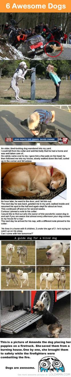 6 Awesome Dogs. My favorite is the one about the old tired-looking dog! So sweet!!: Awesome Dogs, Cat, Sweet, Amazing Dogs, Pet, My Heart, Puppy, Friend, Animal