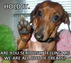 After vacation, this one might be true!! Funny dachshund: Funny Animals, Treats, Dogs, Pet, Hold, Doxies, Funnies, Humor
