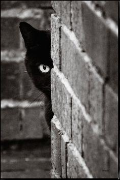 "Black Cat Advice: ""A successful man, is one who can lay a firm foundation with the bricks others have thrown at him."""