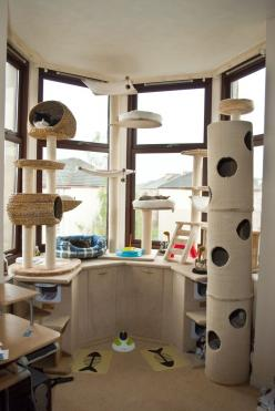 Cat room. This would be awesome. To be then connected to a catio, and a small snuggly corner with bookshelves where the humans and cats could have some proper snuggly time...: Cats, Snuggly Corner, Crazy Cat, Cat Stuff, Cat Tree, Cat House, Small Snuggly,