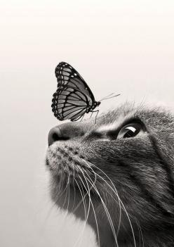 CatButterfly ColorSepia by Dorien Soyez: Cats, Beautiful Cat, Animals, Catbutterfly Colorsepia, Butterflies, Dorien Soyez, Kitty, Photo