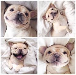 french bulldog smiles: French Bulldogs, Adorable Animals, Happy, Pets, Puppy, Good Morning, Things, Smile, Morning Frenchie