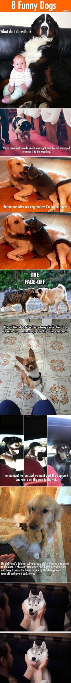 Funny animal pics.: Funny Animals, Adorable Dogs, Aww Funny, Funny Dogs, Funny Animal Pics, Funny Animal Pictures, Funny Pictures, Animals 134, Pict Funny
