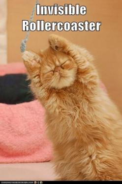 funny cat pictures - Lolcats: Wheeeeee.: Cats, Kitten, Animals, Funny Cat, Pets, Adorable, Things, Kitty, Yoga Cat
