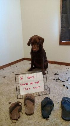 hmmmm....wonder what the left shoe does that the right shoe doesn't??: Funny Animals, Left Shoes, Dog Shaming, Funnies, Animal Shaming, Pet Shaming