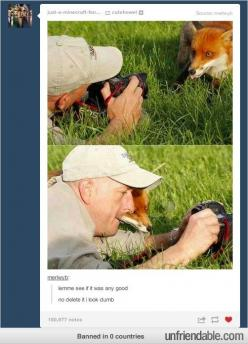 I just love this. And it looks like the fox is sticking it's tongue out in the top pic. Soo sweet: Photos, Animals, Pictures, Funny Stuff, Humor, Funnies, Foxes, Photography