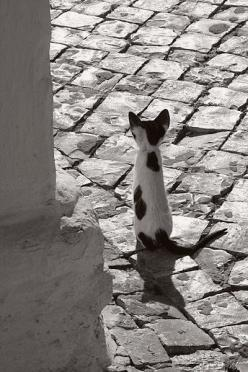 Maaaagro…(thepaintedbench): Kitten, Animals, Sweet, Cute Cats, Black And White Cat Photos, Kitty Kitty, Black And White Cats