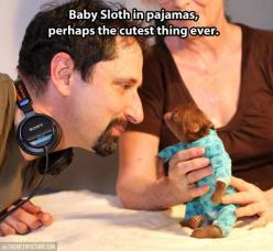 Perhaps the cutest thing ever…: Baby Sloth, Pajamas, Babies, Animals, Sloths, Funny, Things