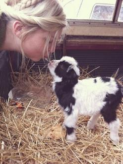 Pygmy goat - I have always wanted one.: Farm Animals, Sweet, Babygoat, Goat Kiss, Baby Pygmy Goat, Pygmy Goats, Miniature Donkey, Friend, Baby Goats