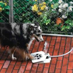 The dog water fountain turns drinking water into a game. | 28 Ingenious Things For Your Dog You Had No Idea You Needed: Ideas, Waterfountain, Dogs, Stuff, Pets, Water Fountains, Animal