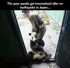 Traumatized panda…and yet another reminder that animals have feelings.: Animals, Earthquake, Funny, Panda Traumatized, Leave Me, Pandas, Close