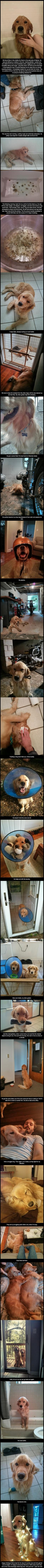 """I rescued a golden retriever this past summer who was just hanging out in the wilds of Atlanta."" LOVED this story!: Sweet Stories, Golden Retrievers, Faith In Humanity Restored, My Heart, Puppy, Animal"