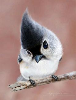 a tufted titmouse............love these little guys. Who knew, they weren't a mouse and weren't a .........well, never mind