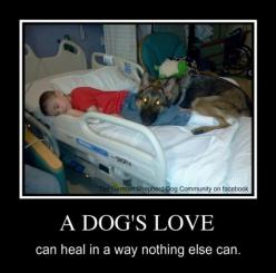 Animals are amazing!  Especially love German shepards!: Doggie, Dogs, Sweet, Healing Animals, Truth, German Shepherd, German Shepard, Hospital, Gsd