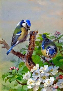 Blue tits (1923) • watercolor: Archibald Thorburn on Tennants Auctioneers http://www.tennants.co.uk/Catalogue/Lots/141725.aspx