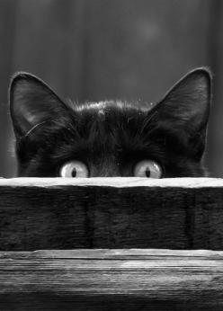 Cat - Black and White Photography