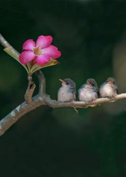 cute small birds and flower -- Photowork by Sijanto: Animals, Sweet, Nature, Little Birds, Beautiful Birds, Photo, Flower