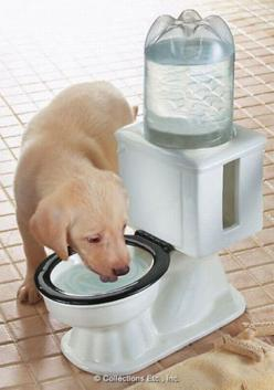 Doggy toilet