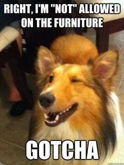 Funny Animal Pictures With Captions | ... Forums • View topic - Cute Animals That Are Not Dogs Or Cats: Animals, Funny Stuff, Funnies, Humor, Funny Animal, Don T Wanna