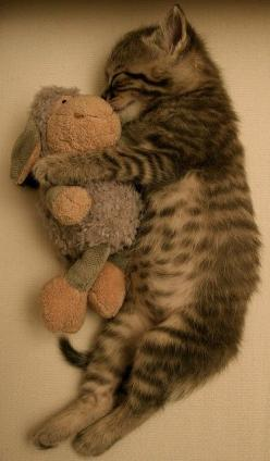 Goodnight kitty, sleep tight.