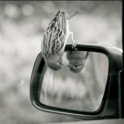 I love this little fellow; wonder what he or she is thinking?: Photos, Mirror, Animals, Reflection, Things, Smile, Birds, Photography