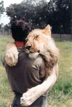I want my cat to love me this much!    ...oh yeah, and be a lion.  The sad thing about these trainers Is the cats usually turn on them. Dangerous job