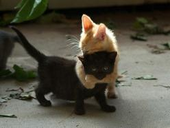 kitten hugs   ...........click here to find out more     http://googydog.com: Animals, Black Cats, Funny, Kittens, Kitty, Friend, Blackcat, Bad Luck