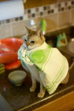 Lol super kitty, now that you just trapped yourself in the middle of a pool, what are you going to to: Cats, Animals, Poor Decision, Funny Stuff, Humor, Funnies, Funny Animal