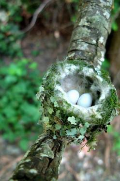 "March | "". . . living healthily and sustainably, and looking to nature for renewal and inspiration."" ~ Jay Woodman: Baby Hummingbirds, Nature, Bird Nests, Egg, Spring, Photo, Animal"