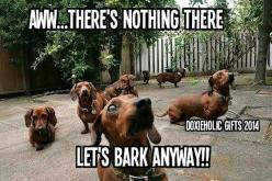 Oh, those doxies -- that's the truth!: Daschund, Animals, Weenie, Doxie S, Doxies, Weiner Dogs, Wiener Dogs